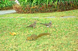 綺麗な鳥と戯れるリスちゃん